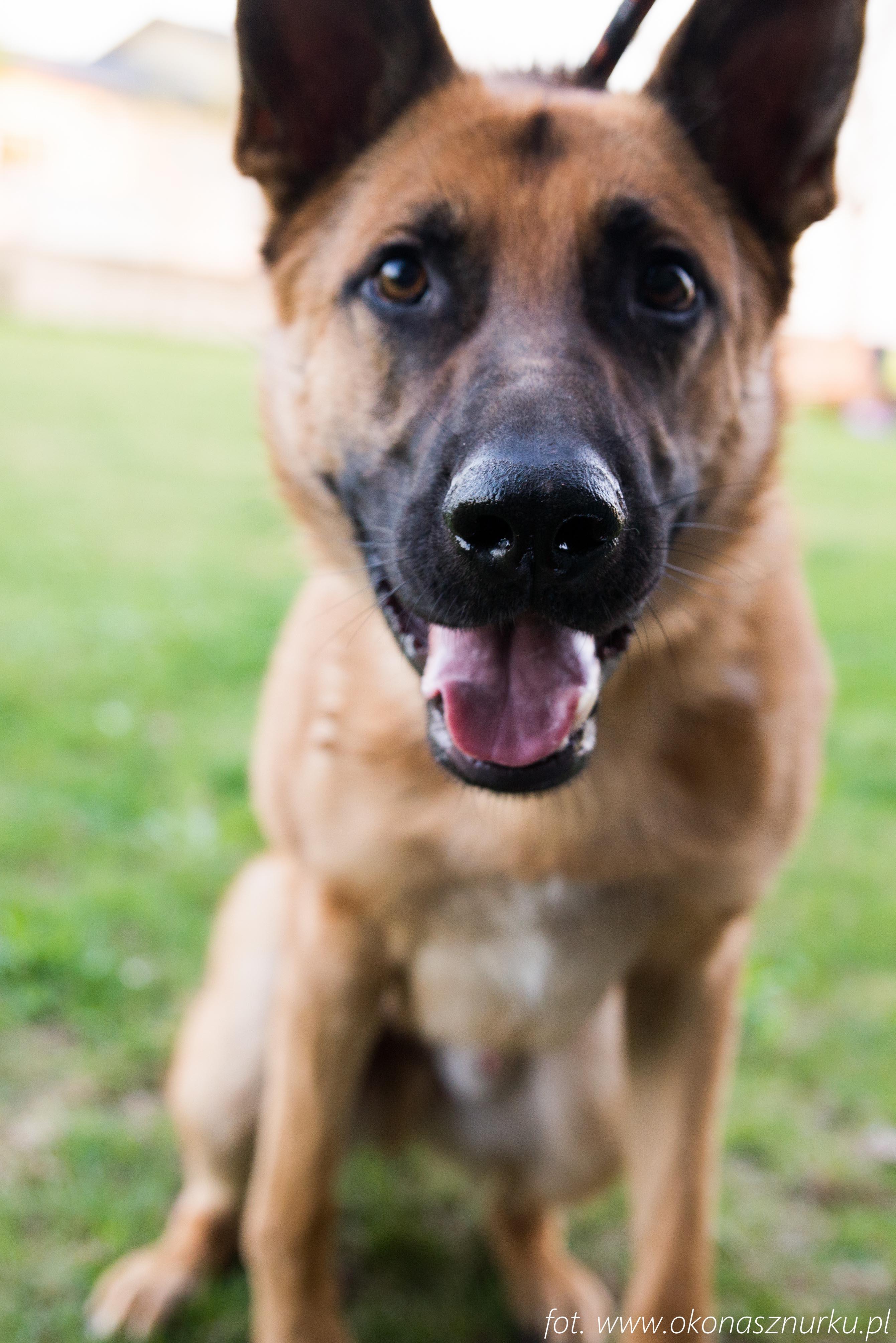czedar-szkolenie-dog-academy-oko-na-sznurku (12)