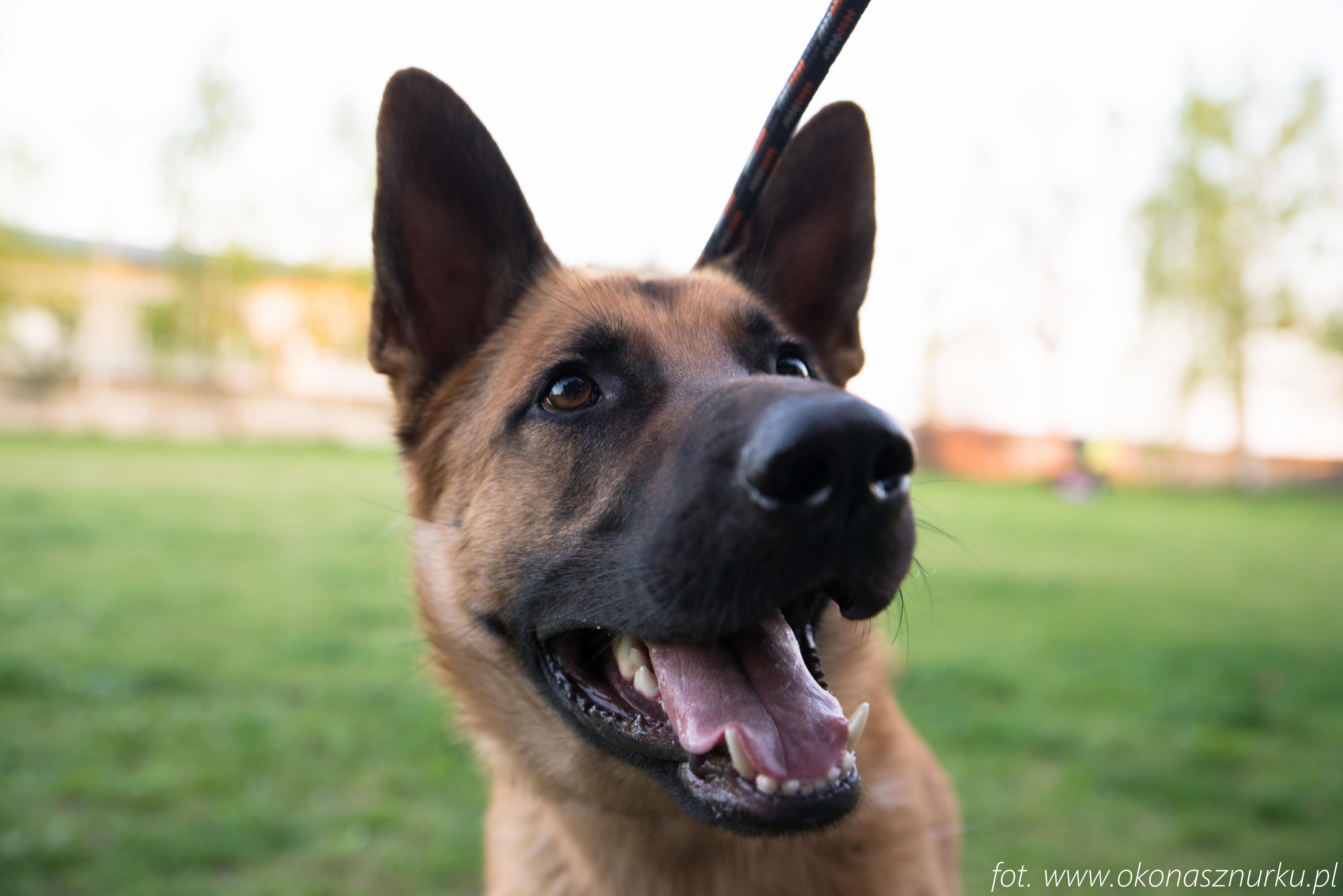czedar-szkolenie-dog-academy-oko-na-sznurku (13)