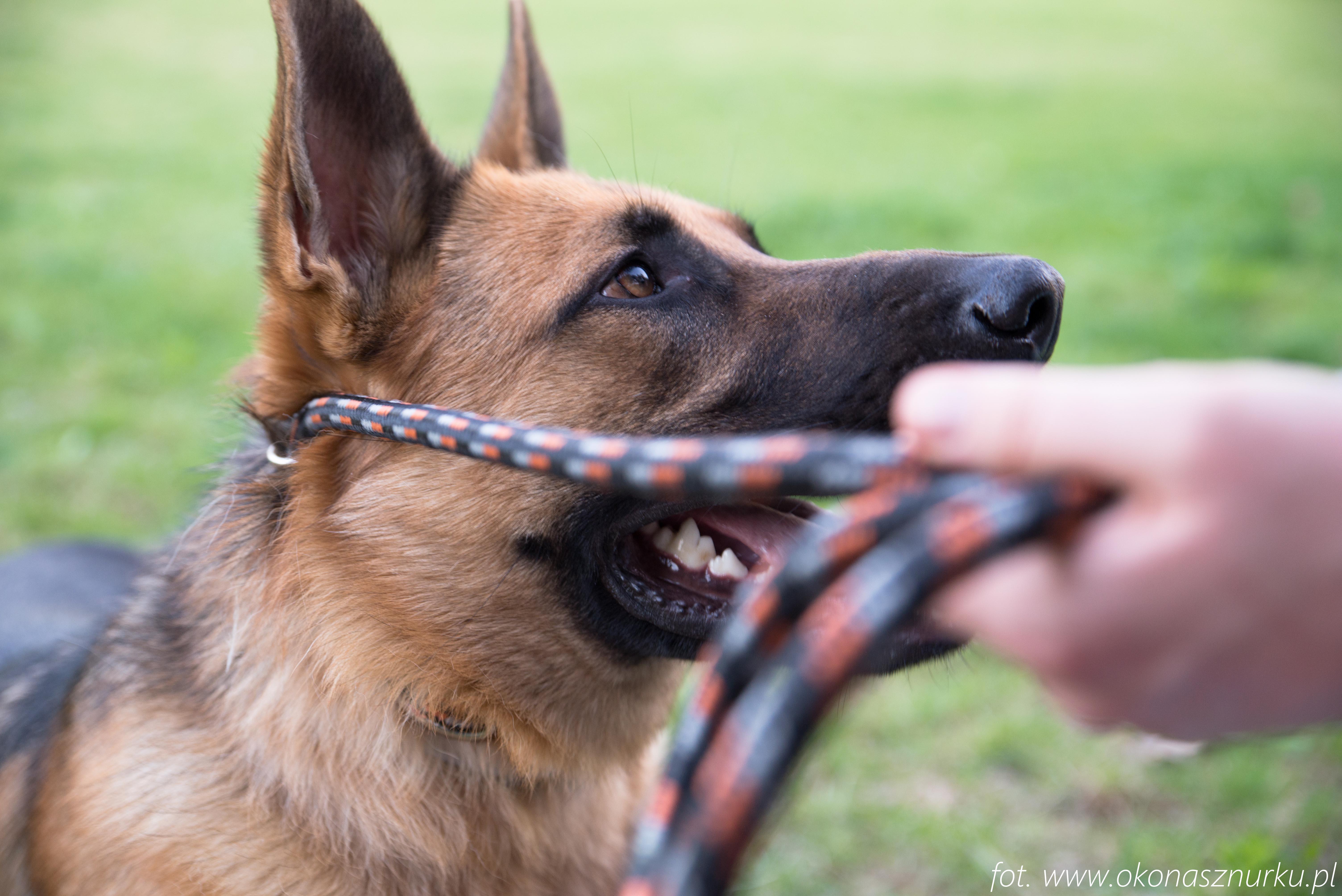 czedar-szkolenie-dog-academy-oko-na-sznurku (14)