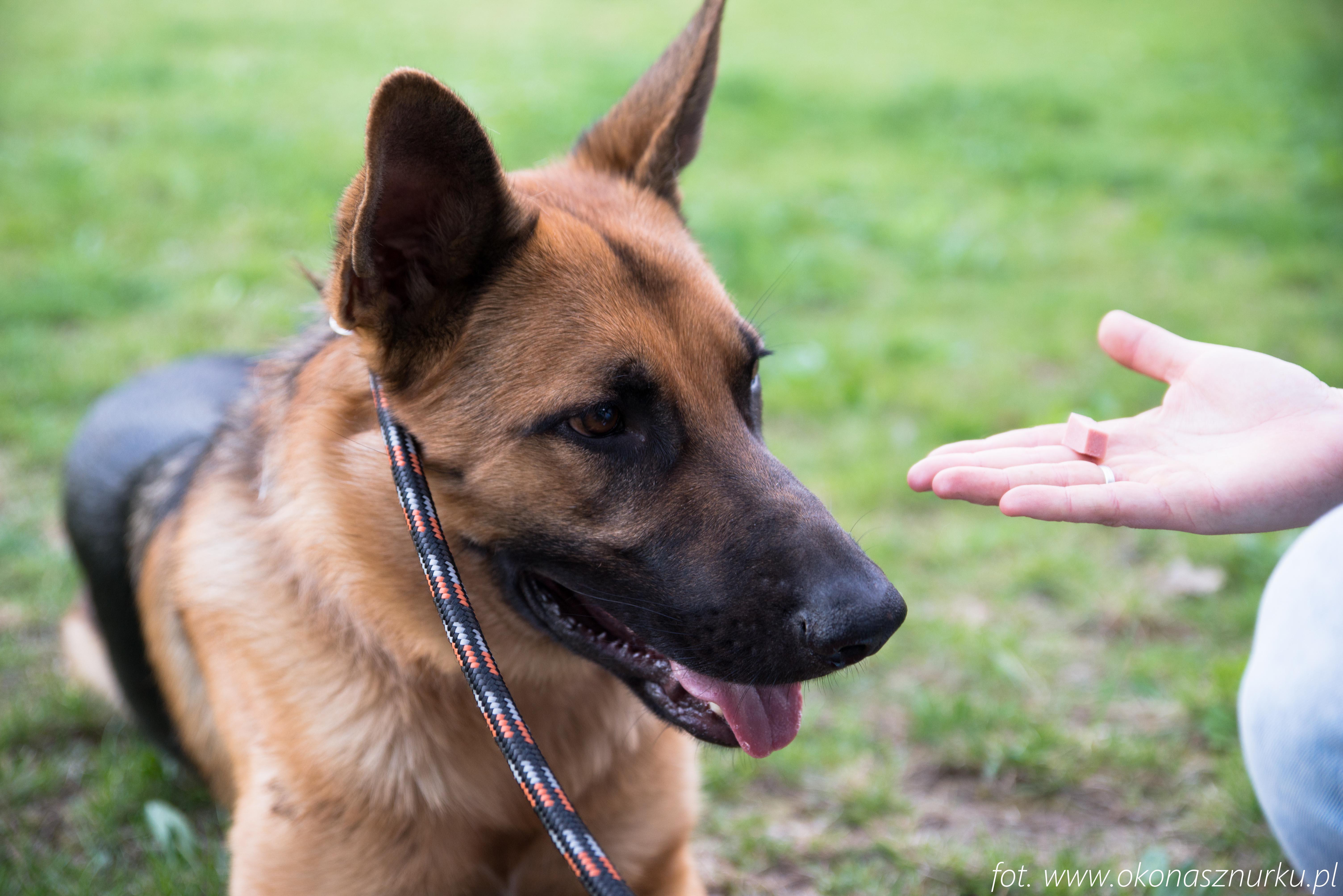 czedar-szkolenie-dog-academy-oko-na-sznurku (15)