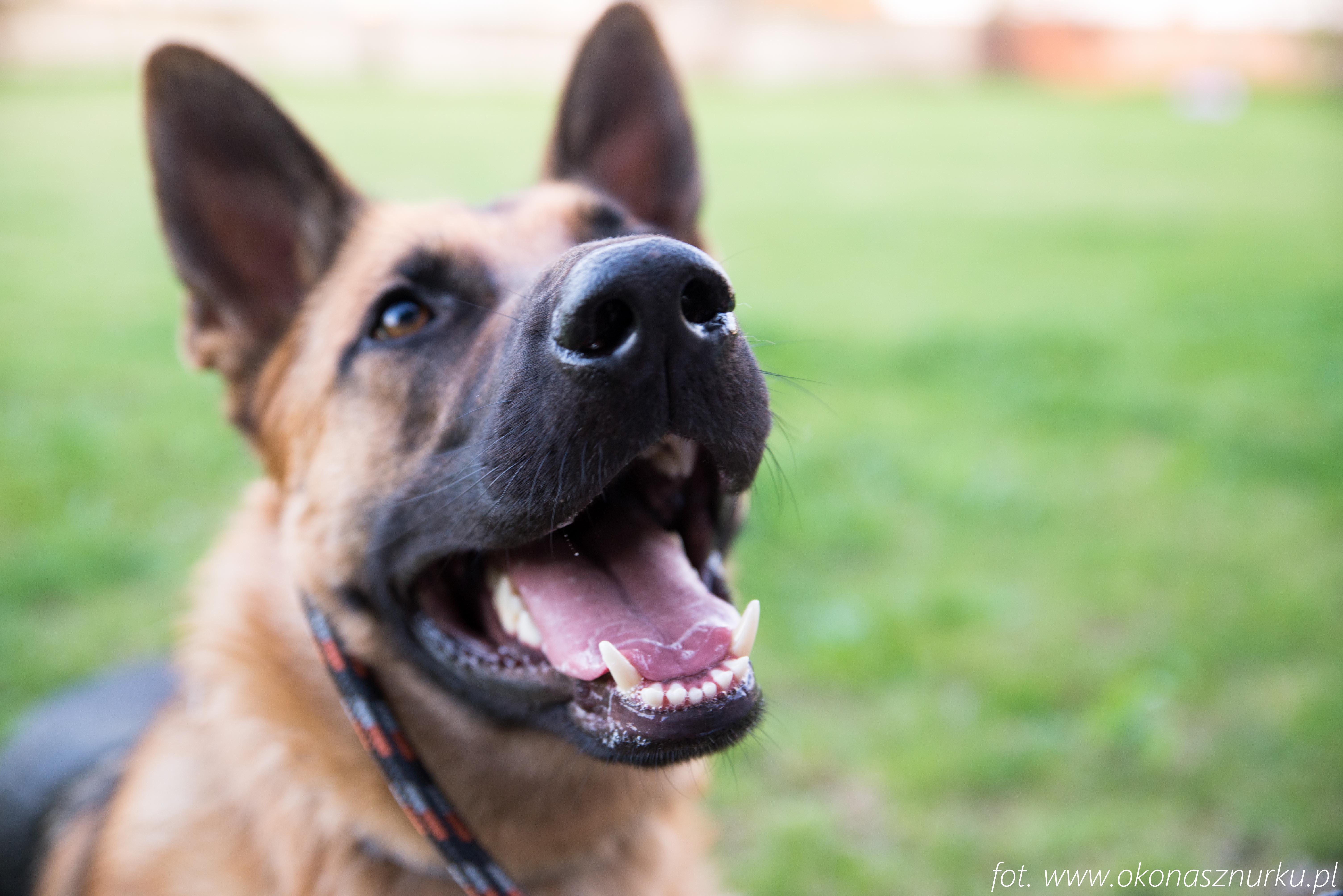 czedar-szkolenie-dog-academy-oko-na-sznurku (16)