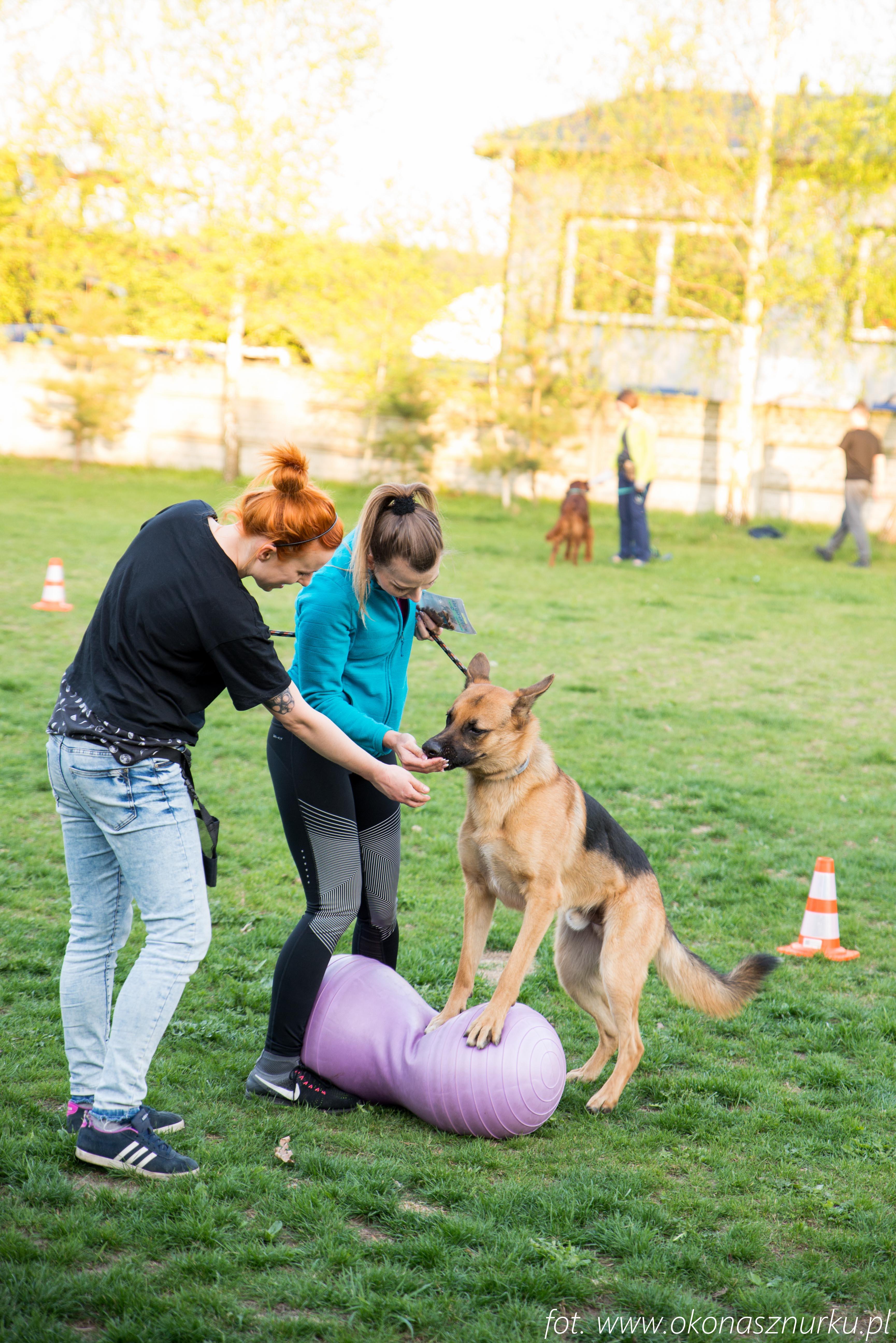 czedar-szkolenie-dog-academy-oko-na-sznurku (3)