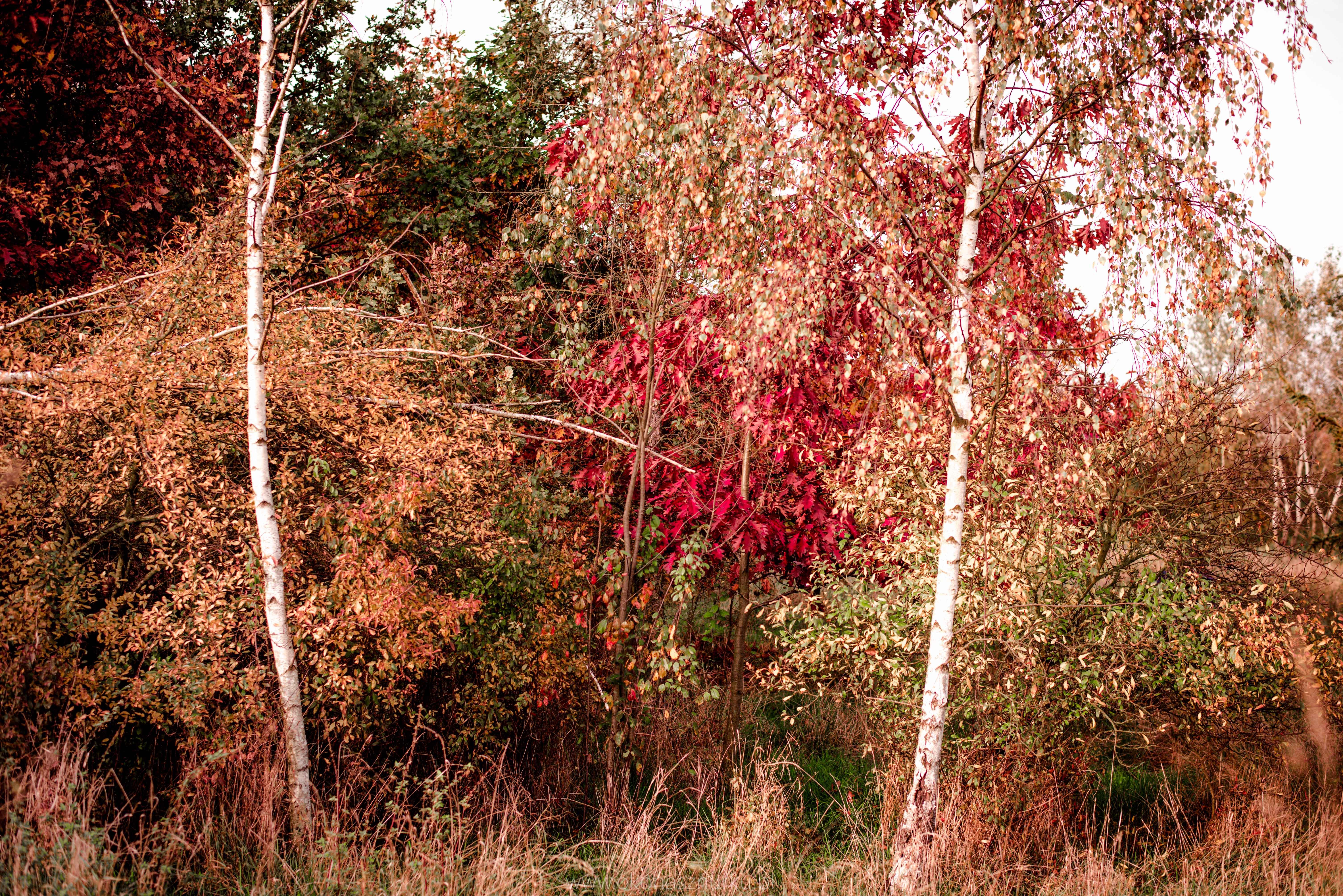 fotografia-przyrodnicza-dolnoslaskie (1)