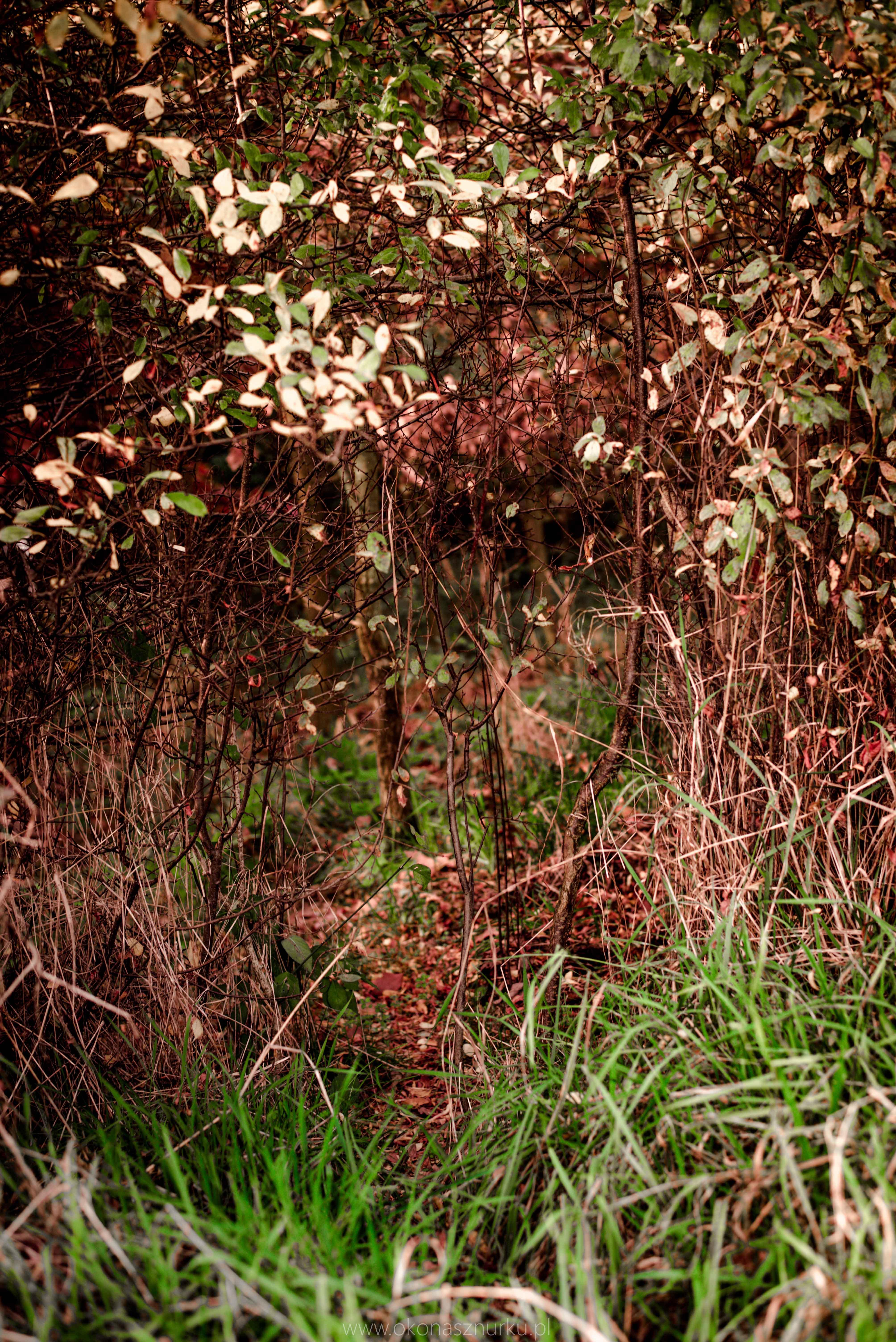 fotografia-przyrodnicza-dolnoslaskie (10)