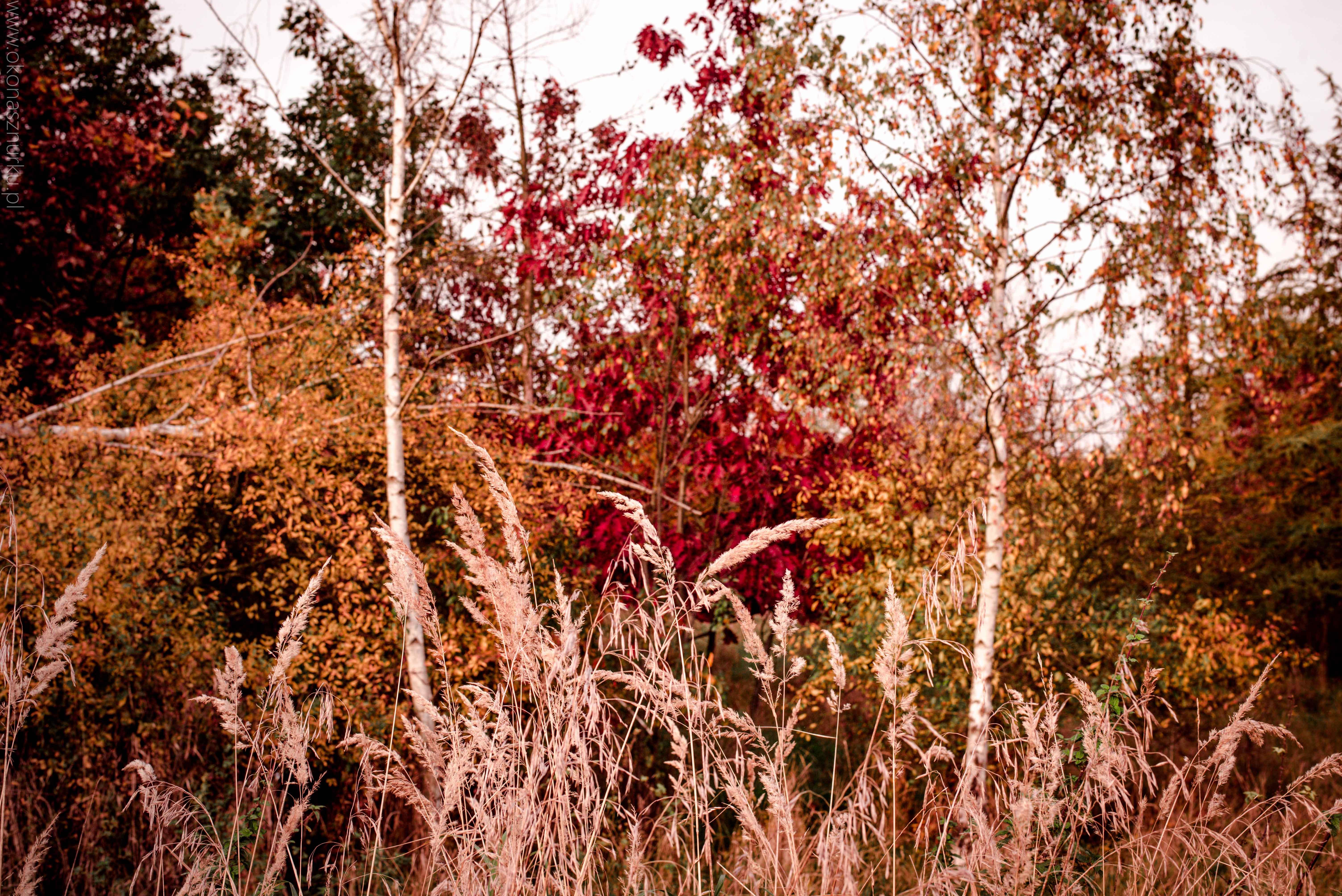 fotografia-przyrodnicza-dolnoslaskie (14)
