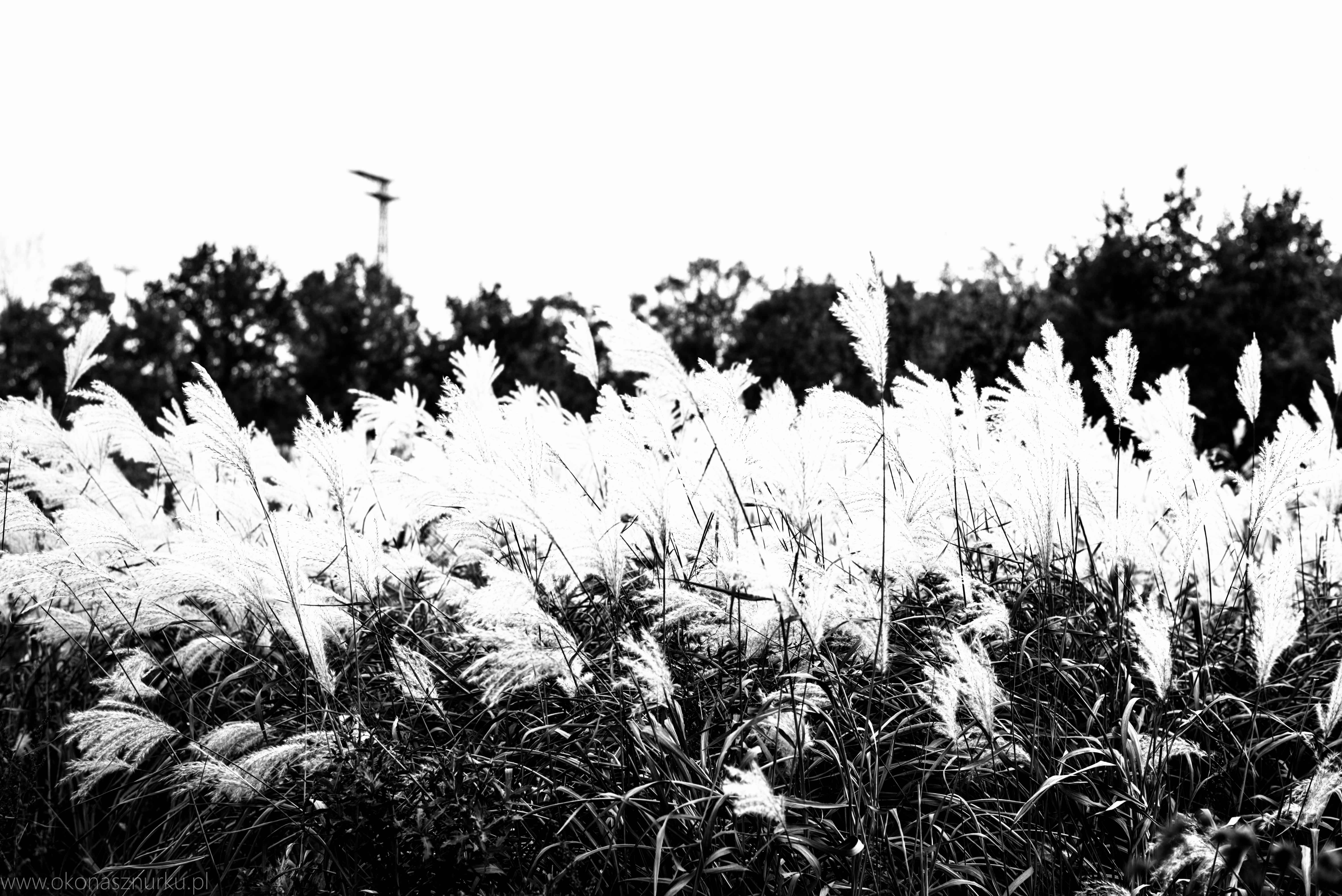 fotografia-przyrodnicza-dolnoslaskie (16)