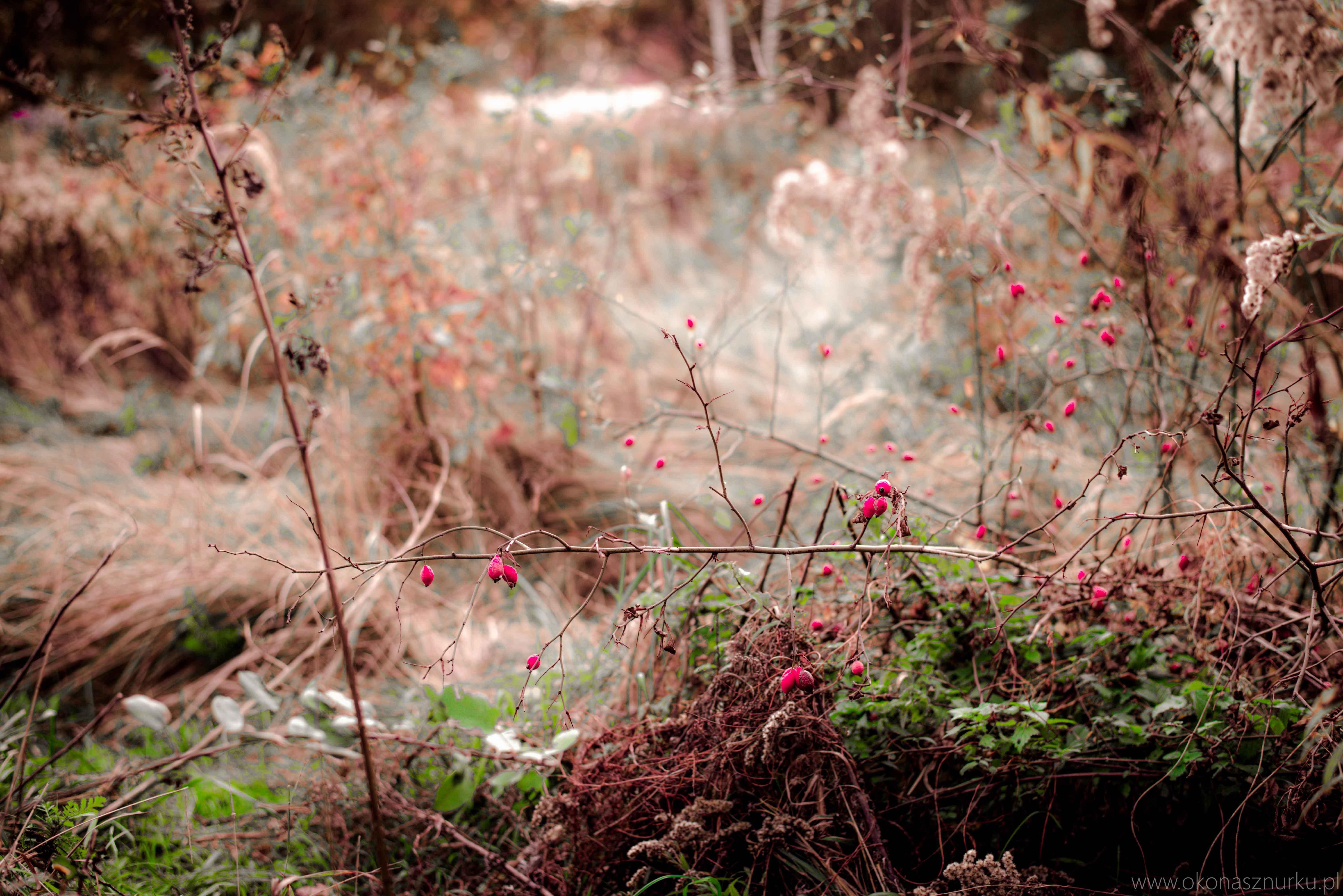 fotografia-przyrodnicza-dolnoslaskie (19)