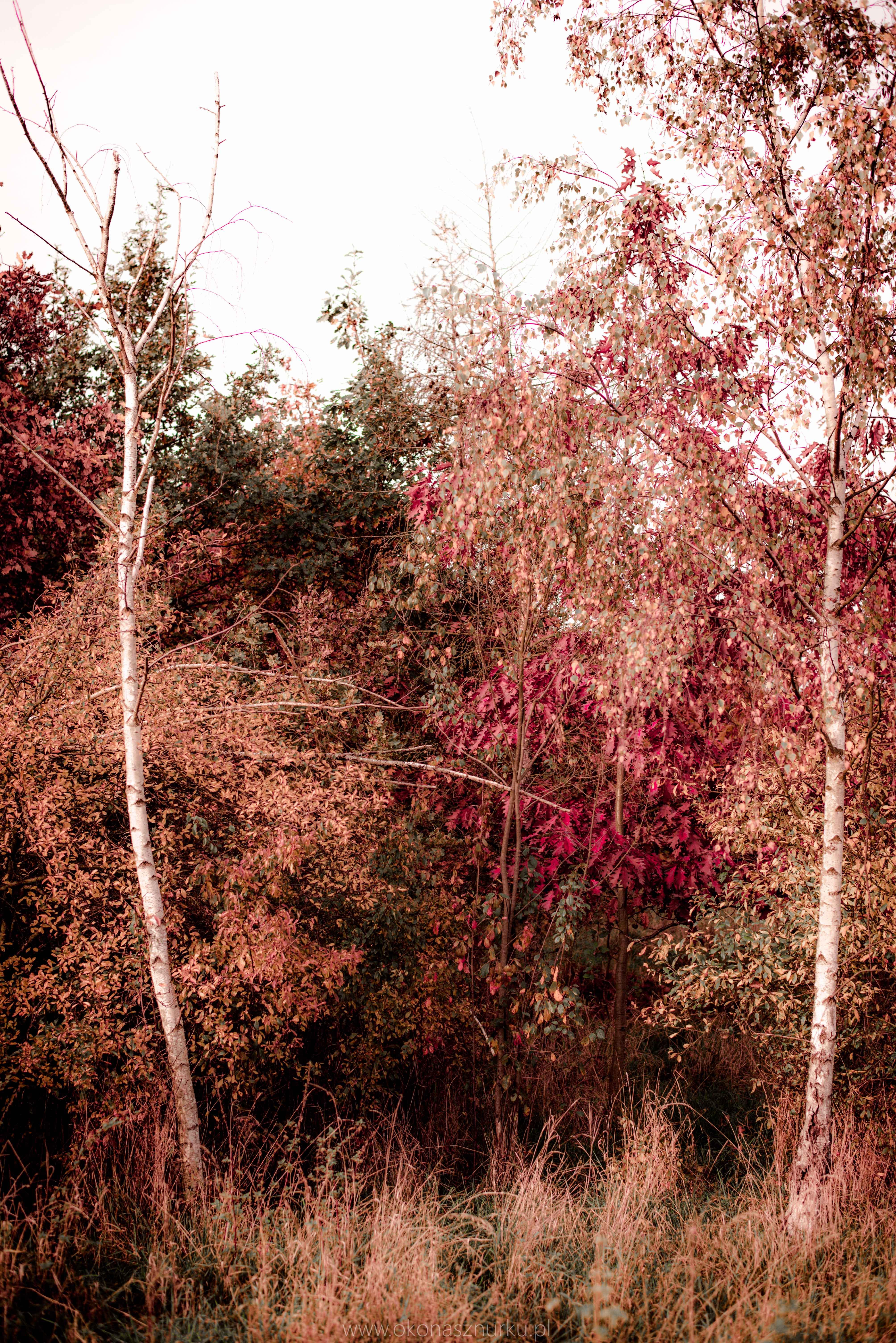 fotografia-przyrodnicza-dolnoslaskie (2)