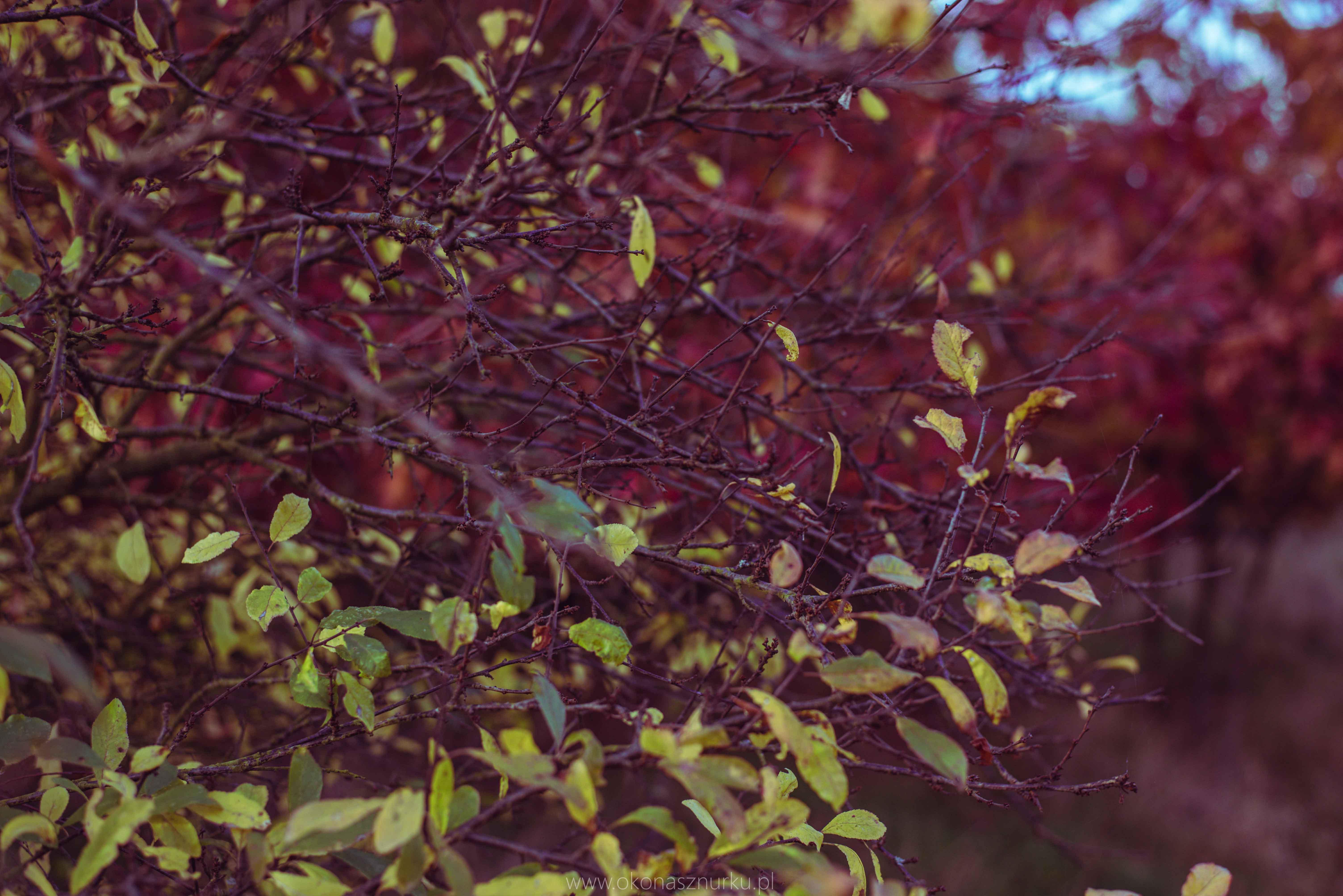 fotografia-przyrodnicza-dolnoslaskie (3)