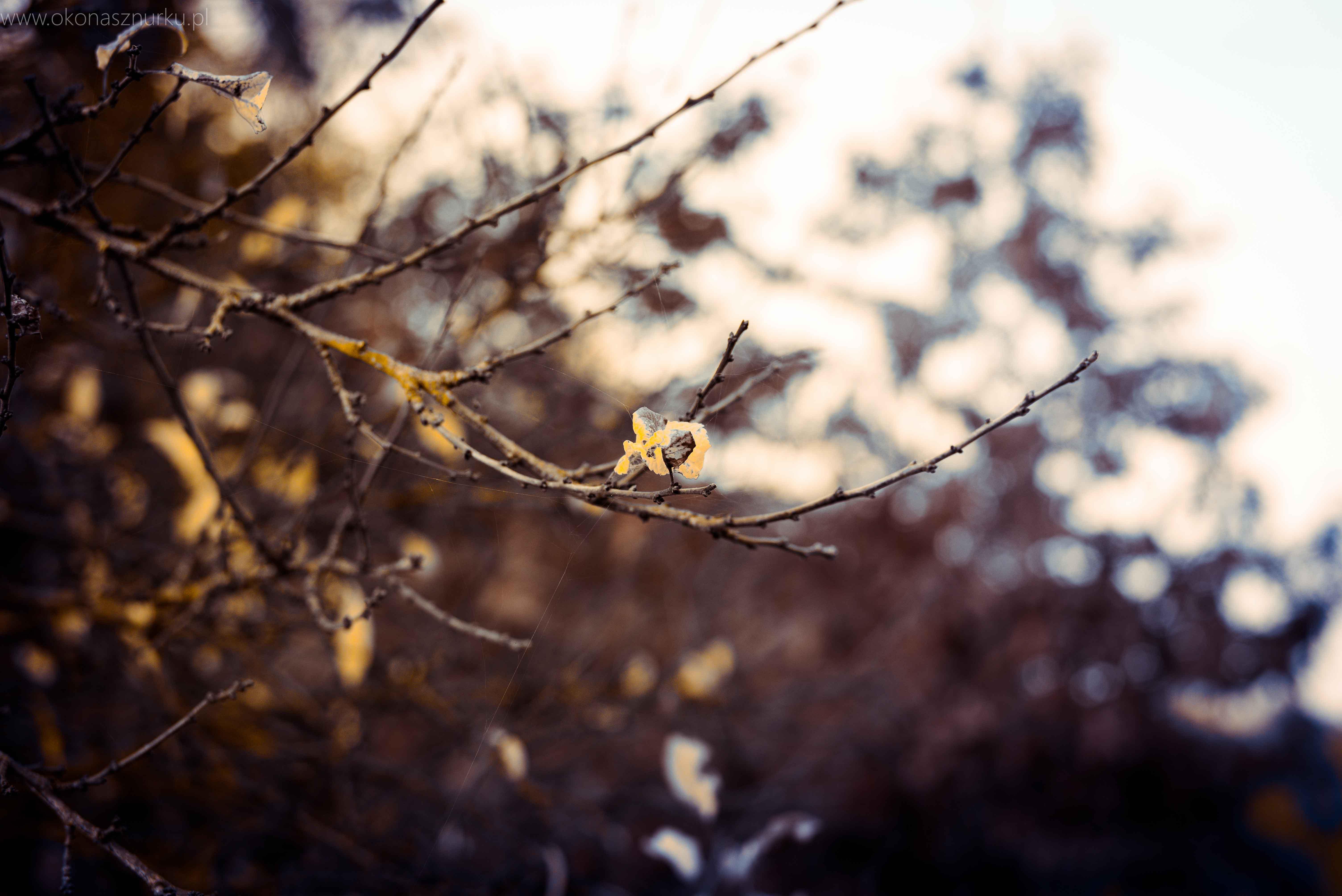 fotografia-przyrodnicza-dolnoslaskie (4)