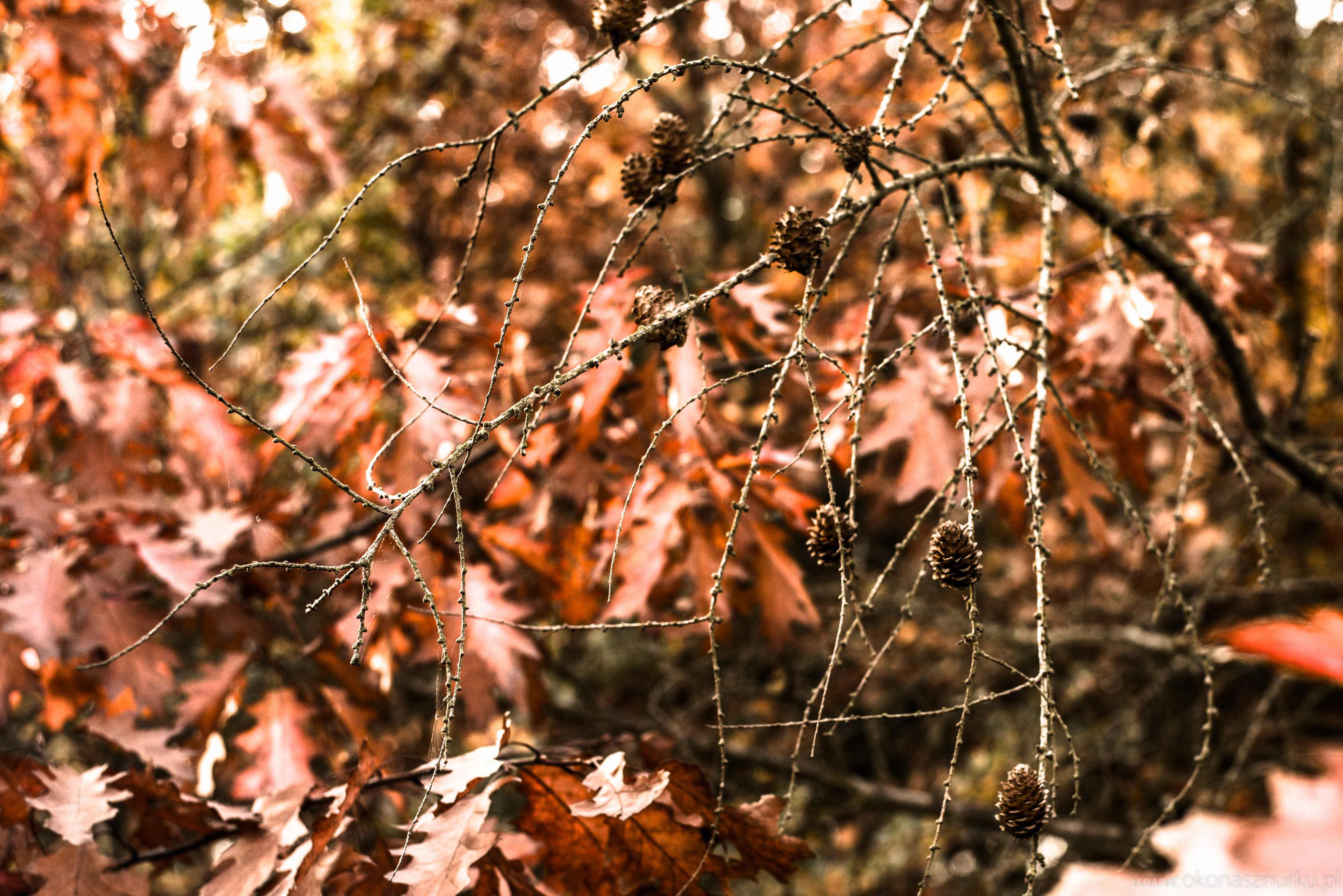 fotografia-przyrodnicza-dolnoslaskie (5)