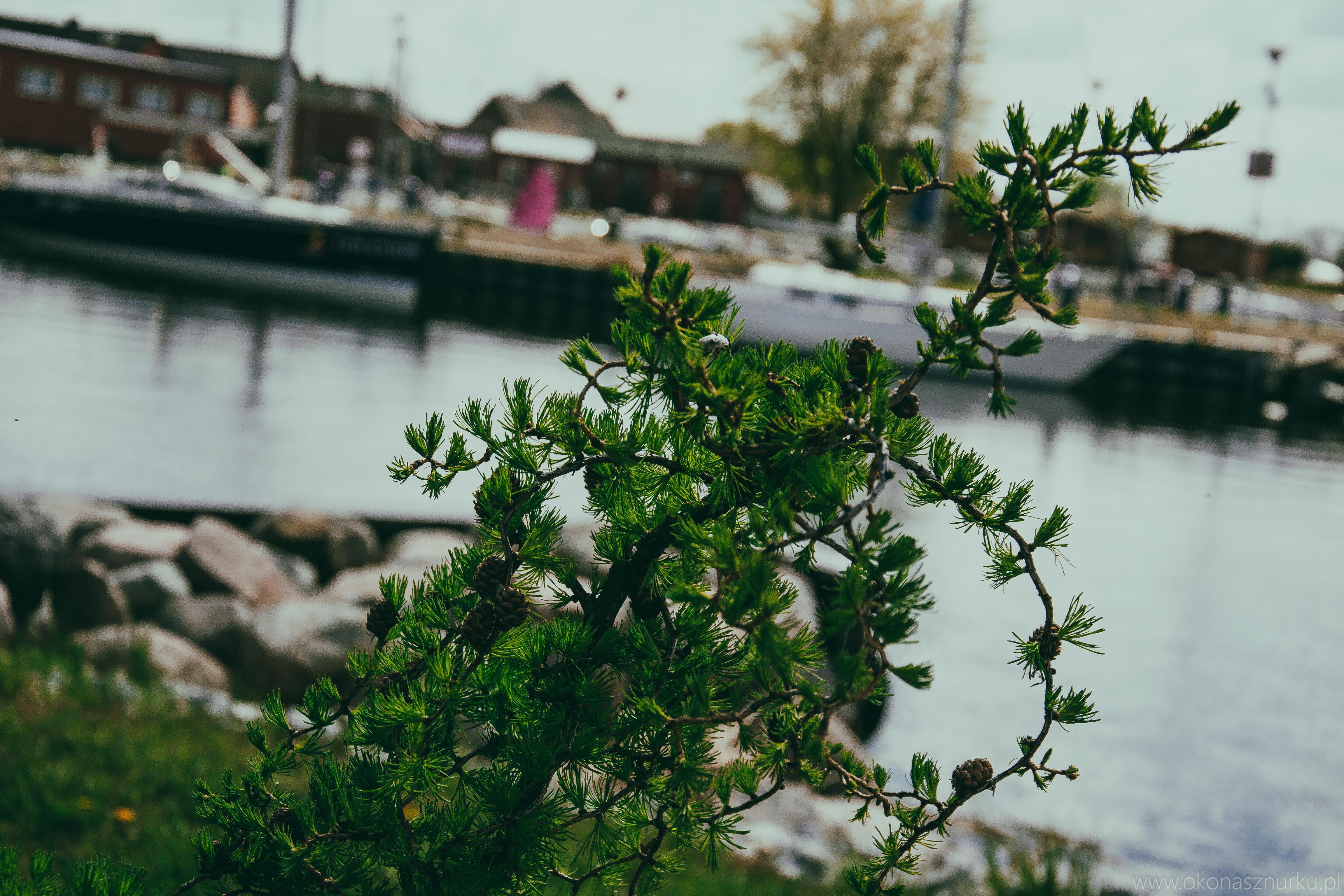 marina-jacht-wyprawy-morskie-silesia-szczecin-goclaw-lubczyna (61)
