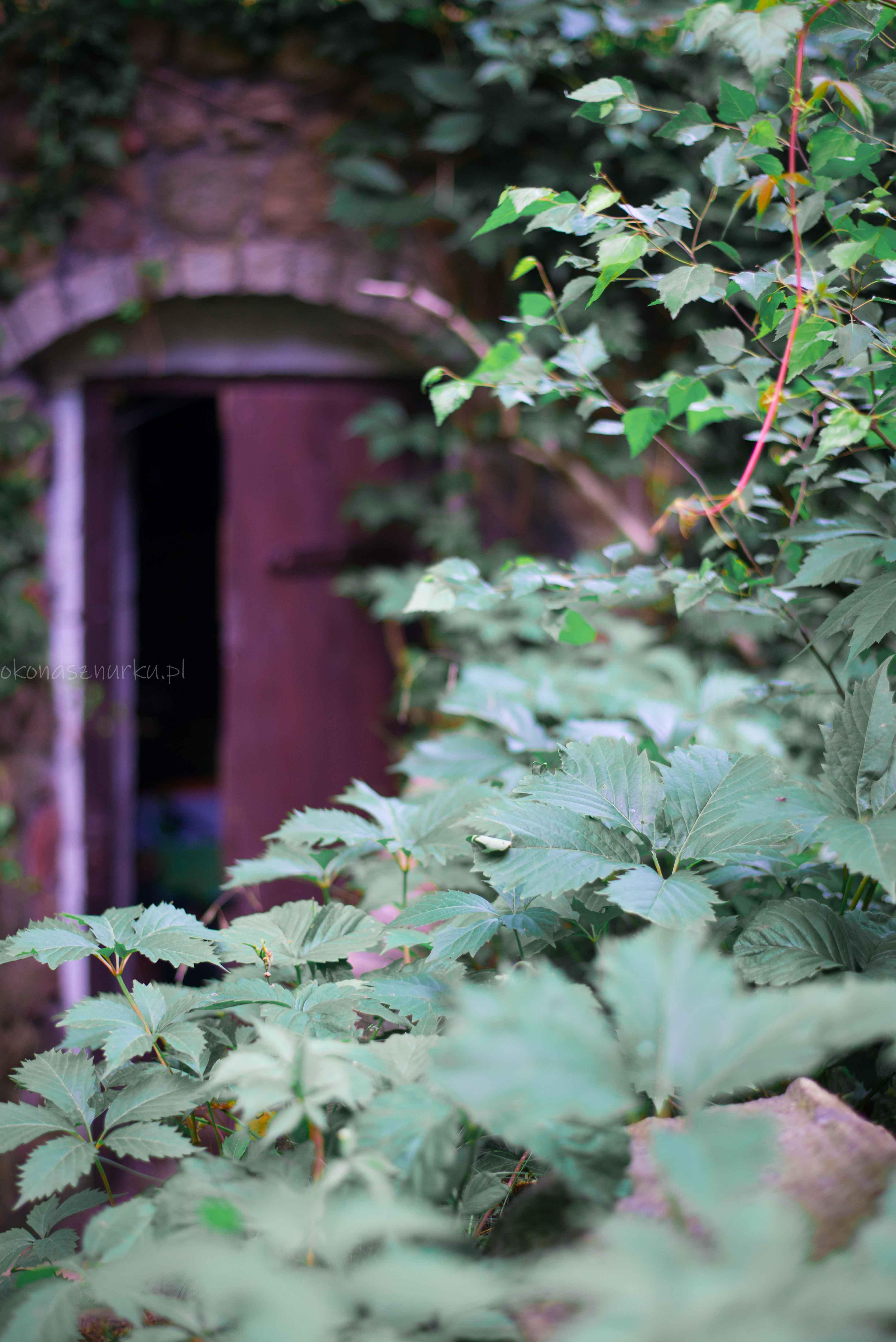 okonasznurku-natura-zdjecia-wroclaw (6)